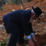 The Rosh Yeshiva, Rav Drori, planting trees on Tu B'Shvat.
